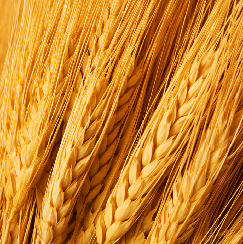Wheat Futures | Daniels Trading