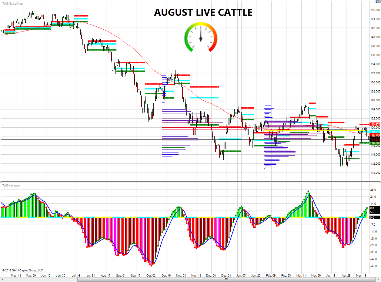 tak-cattle-live-05232016
